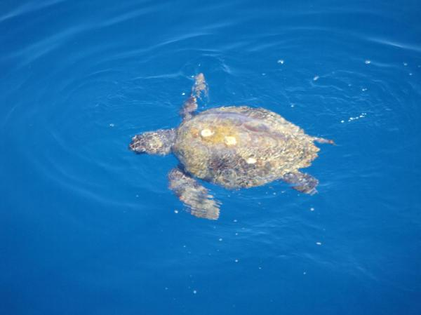 WOW look it's a sea turtle!