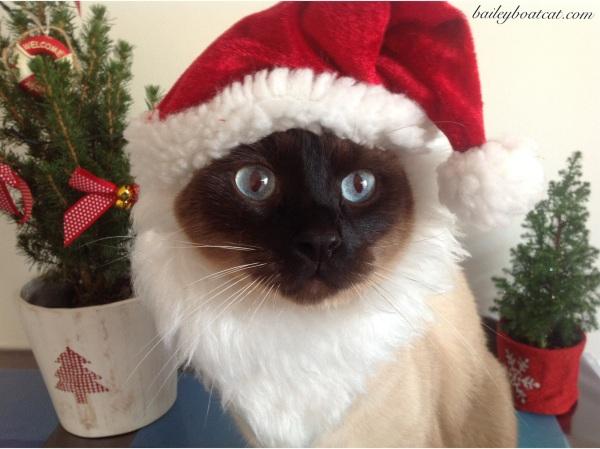 Santa Paws!
