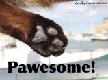 PAWESOME!