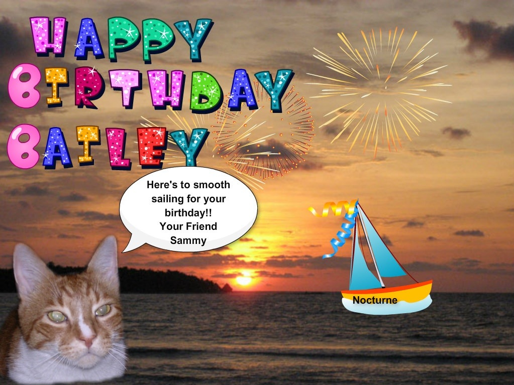 Bailey's birthday bash! – Bailey Boat Cat