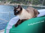 Comfy Kayak