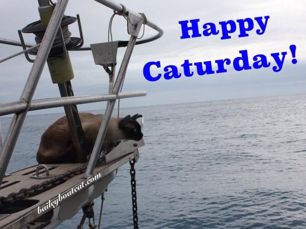 Happy Caturday!