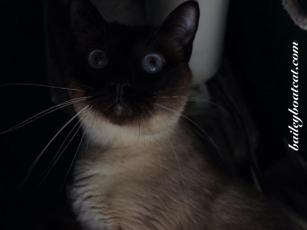 Scary Selfie!