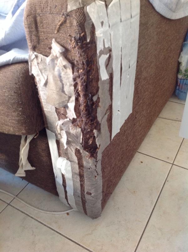Ruined sofa.jpg
