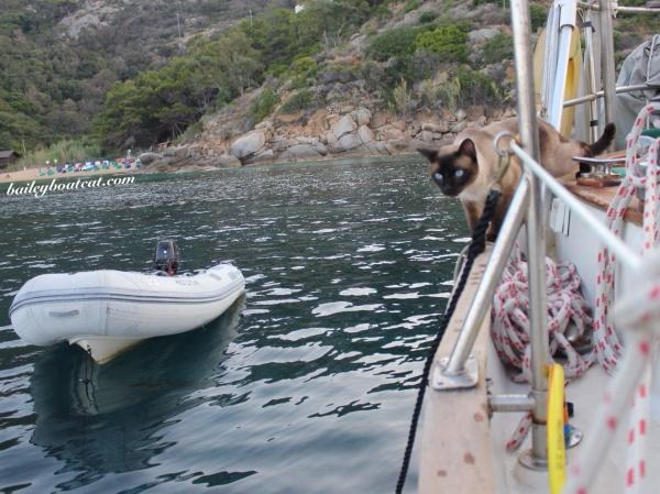 Bailey Boat Cat