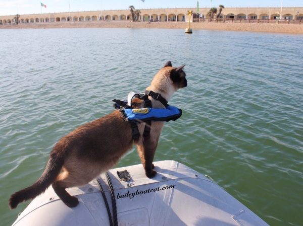 Bailey Boat Cat dinghy ride