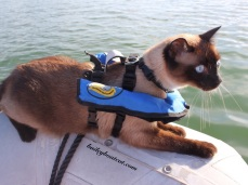 Critter's Inflatable life jacket