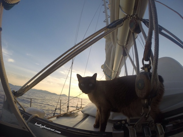 Bailey Boat Cat Sunset