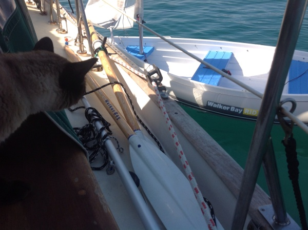 Pawesome sailing dinghy!
