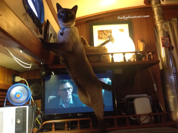 Time for fish TV!