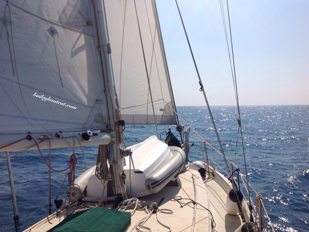 Purrfect day to sail to Ponza!