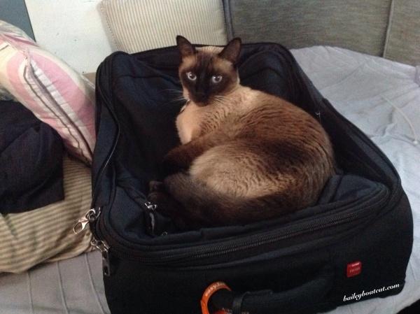 Pack me!