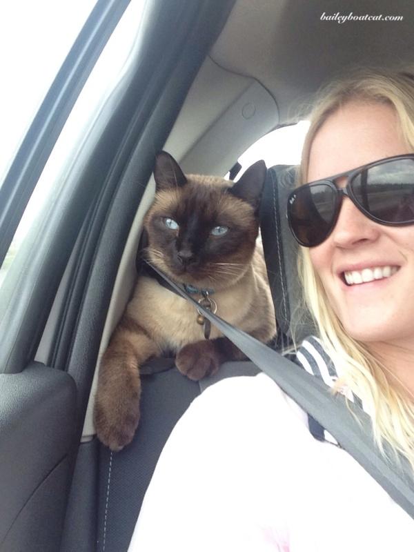 Happy car journey!