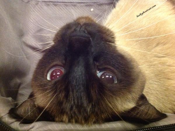 Upside down selfie!