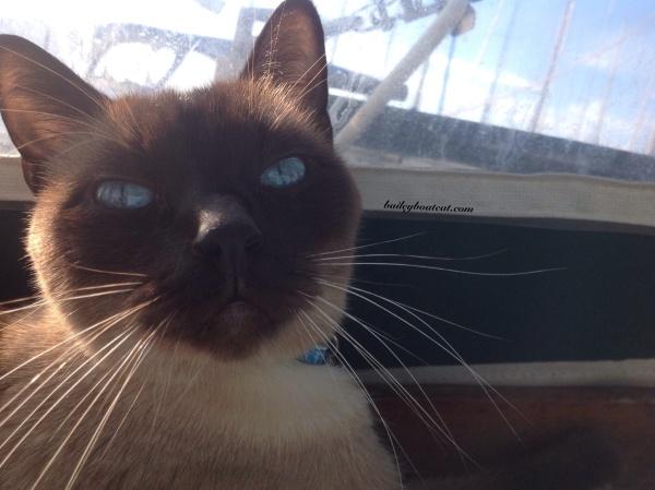 Sunny selfie!