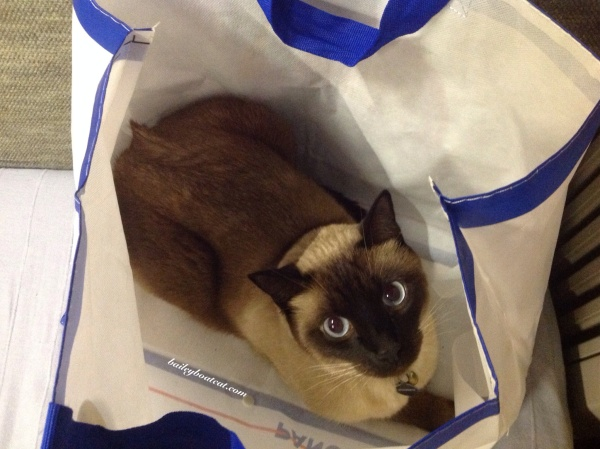 The bag is mine now!