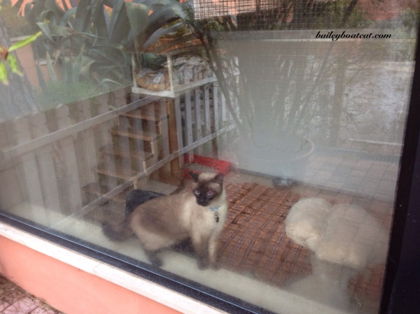 Italian cat camp!