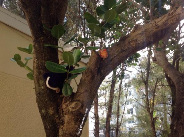 Climbing the tree!