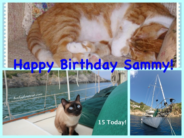 Happy Birthday Sammy!