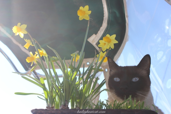 Flower power selfie!