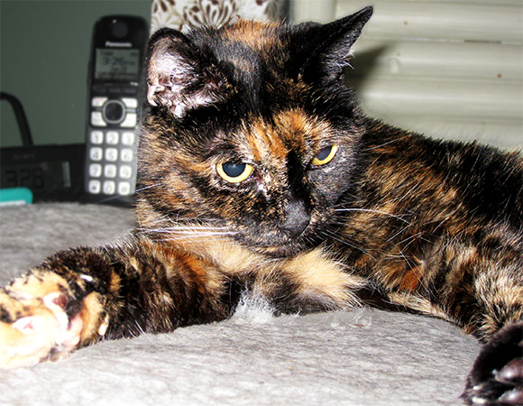 Photo from: http://www.guinnessworldrecords.com/news/2015/3/happy-birthday-tiffany-two-worlds-oldest-cat-living-is-27-today-374397