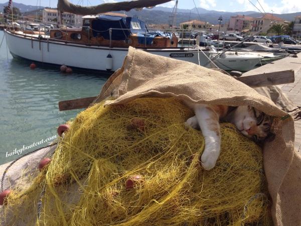Sleepy Fishercat!