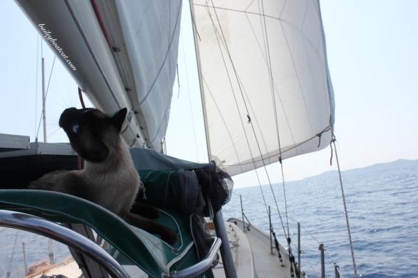 Simply Sailing!