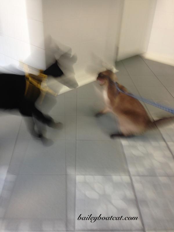 Be gone dog!