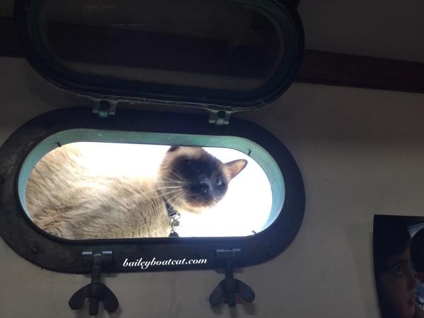Porthole peeking!
