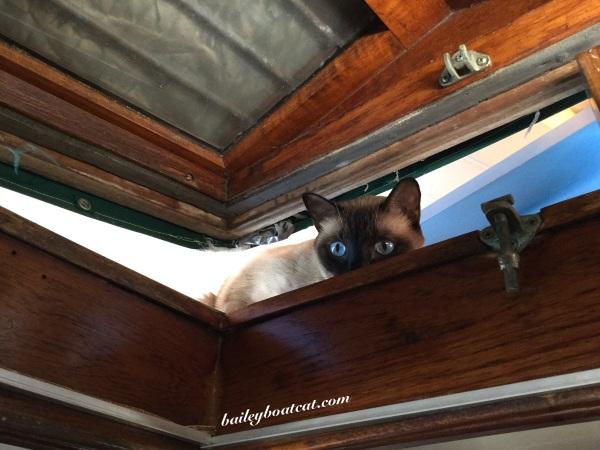 Peeping through the hatch!