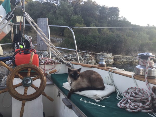 Anchored on Caturday