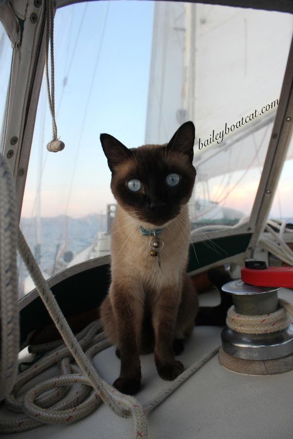 Sailor Selfie