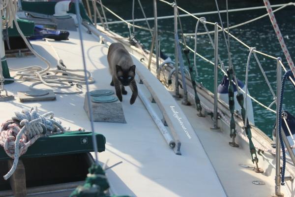 Deck patrol