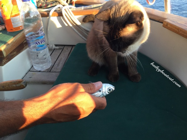 Fish offering