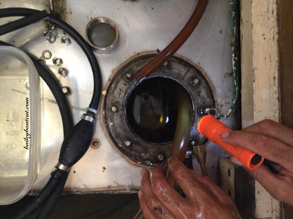 Diesel bug in the tanks