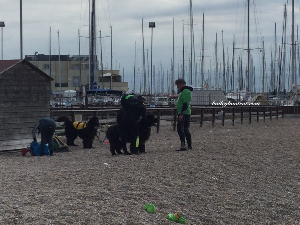 K9 rescue dogs