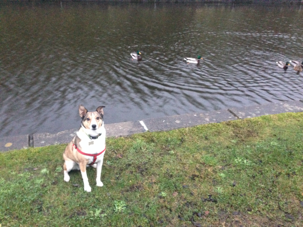 Missy at the canal