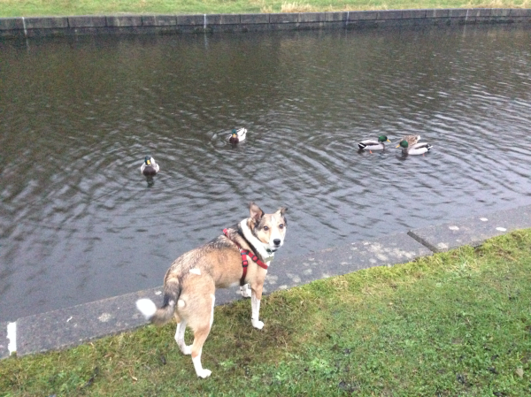 Missy and the ducks