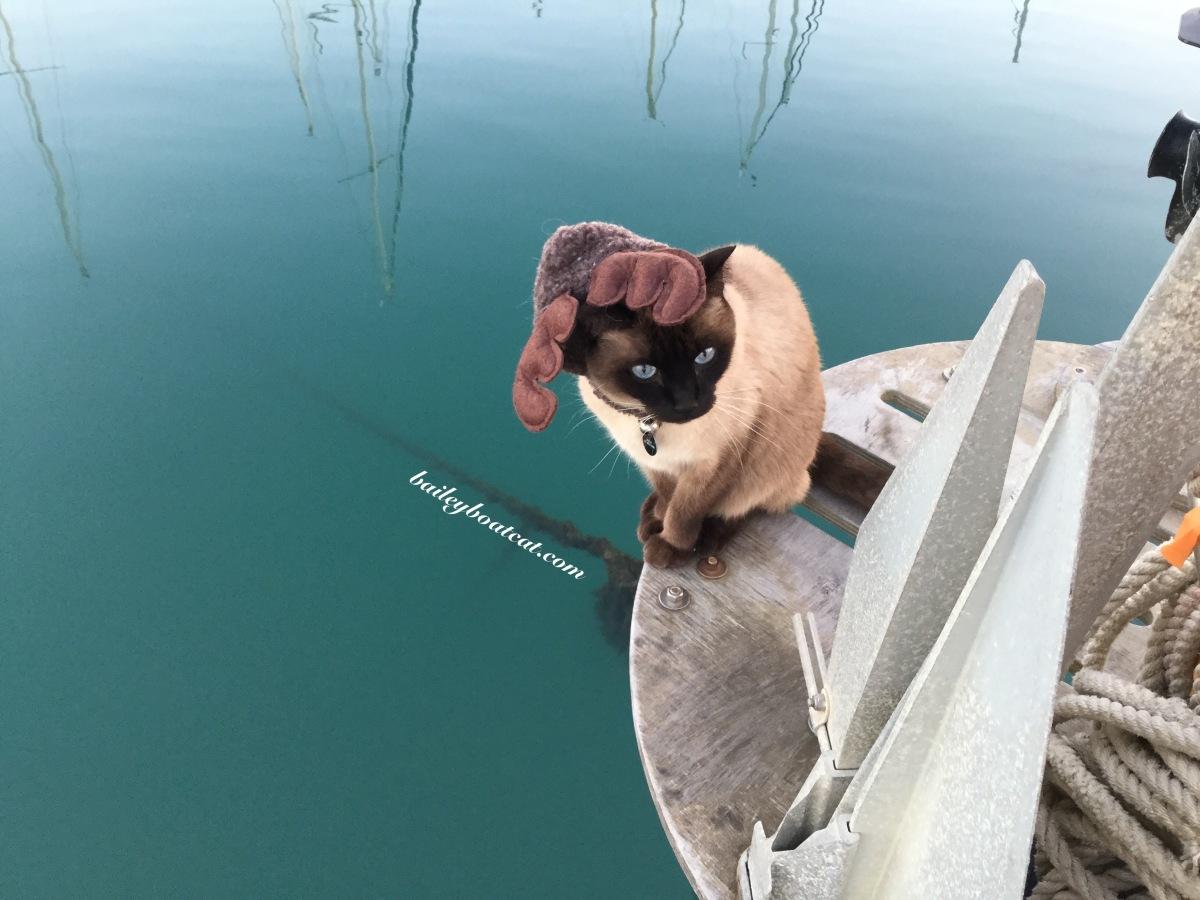 Reindeer selfies