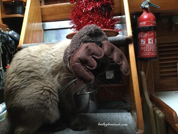 Reindeer Bailey