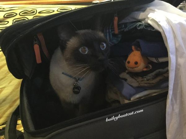 Suitcase selfie