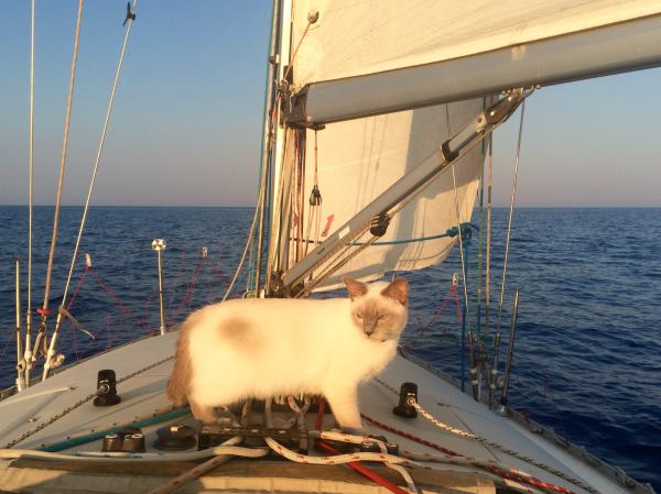 Lily sailing