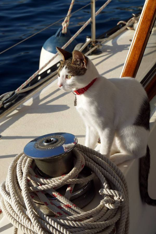 Ketch Kitten