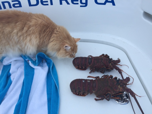 Pumpkin and lobsters