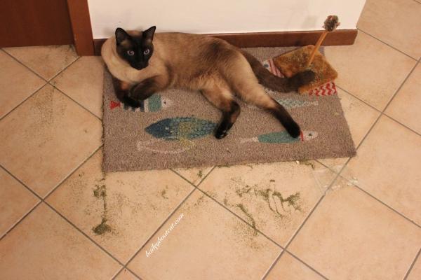 Cat Nip Mess