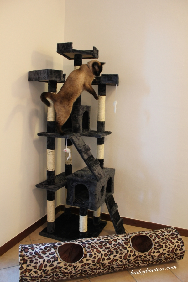 Climbing the cat tree