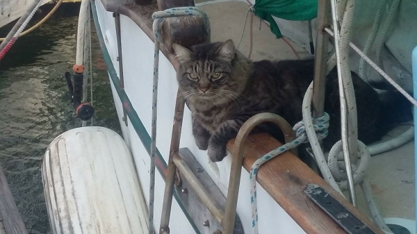 Bubba on the boat