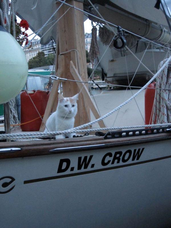 D.W.Crow