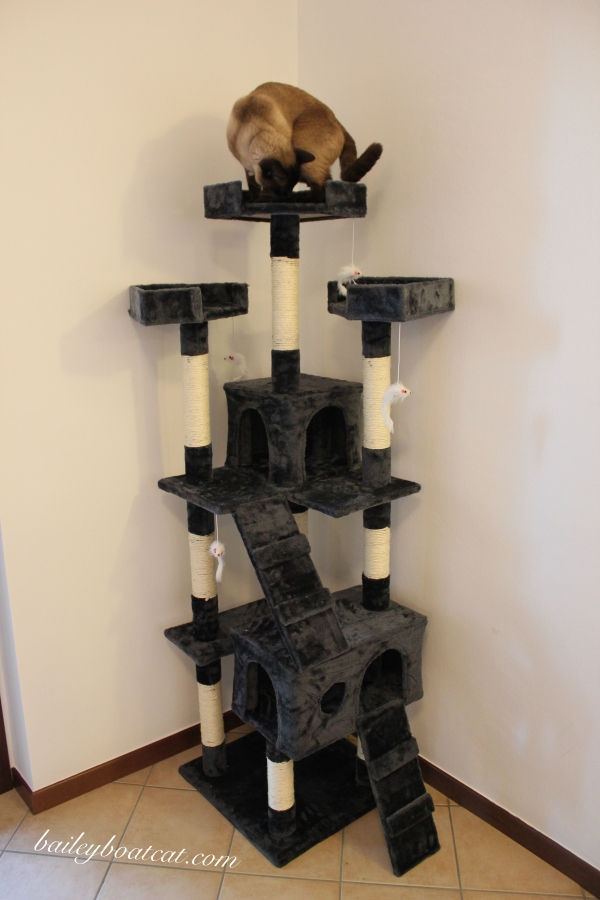 King of my cat tree!