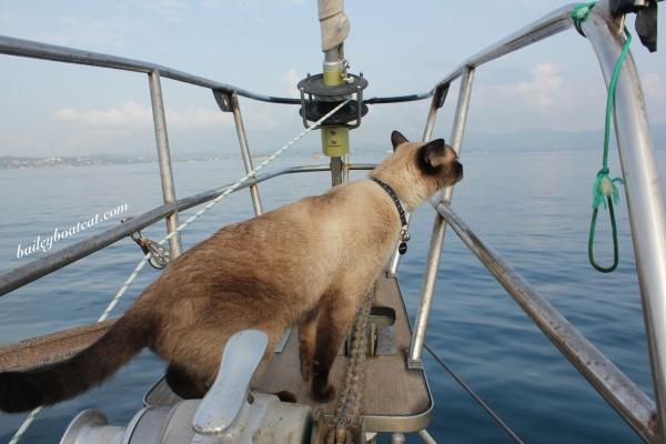 Sea breeze sniff!